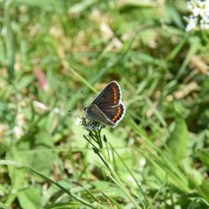 Azuré commun femelle  #butterfly #papillon #igersfrance #igersnouvelleaquitaine #igersdeuxsevres #igersniort #garden #jardin #nature  #etod79_79 #etod79_garden #etod79_animals #etod79_flower Album, Instagram, Nature, Animals, Gardens, Female, Butterflies, Naturaleza, Animales
