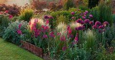 Allium firmament (Ail d'ornement), Stipa tenuissima, Gladiolus communis ssp. Landscape Design, Garden Design, Gladiolus, Garden Borders, Colorful Garden, Plantation, Garden Cottage, Prairie Garden, Dream Garden