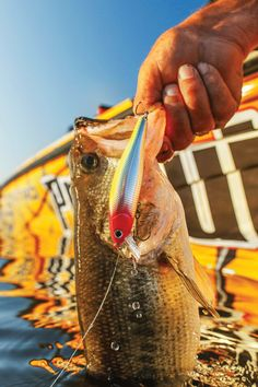 Jerkbaits And Crankb Jerkbaits And Crankbaits For Bass - In-Fisherman Fishing Times, Gone Fishing, Fishing Reels, Fishing Stuff, Kayak Bass Fishing, Fish Information, On Golden Pond, Fishing Techniques, Largemouth Bass