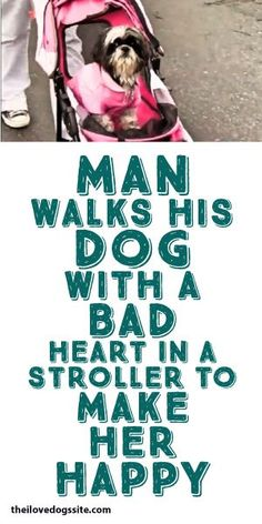 Man Walks His Dog With A Bad Heart In A Stroller To Make Her Happy! <3