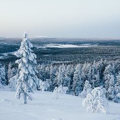 When you find a forest thats unlike any youve seen before painted by winter in brush strokes of startling whiteToday may be the first day of spring here in Europe but its certainly not too early to start planning a winter trip to Lapland New on the blog today we talk about all the wonderful things to do on a winter trip to Lapland Go check it out Link in bio