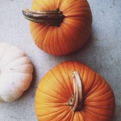 pumpkins @callieaugustin