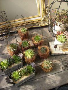 ワイヤークラフト : green + wire Succulent Gifts, Succulent Gardening, Cacti And Succulents, Planting Succulents, Green Garden, Garden Art, Cactus Y Suculentas, Eco Friendly House, Wire Crafts