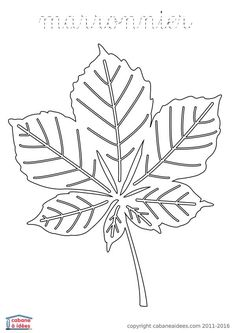 chestnut tree leaf coloring pages - photo#16