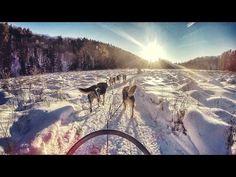 Dogsledding in Haliburton, Ontario  | Travel Dudes Social Travel Community