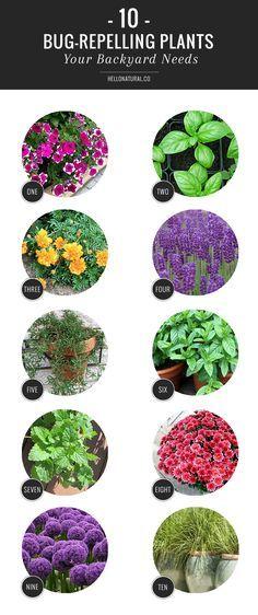 10 Bug-Repelling Plants Your Backyard Needs | http://hellonatural.co/10-bug-repelling-plants-your-backyard-needs/
