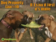 Dog Property Law #10