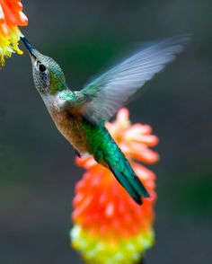 Hummingbird sip Photo by George Campbell -- National Geographic Your Shot