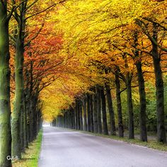 kleurrijke autotocht Photo of the Day -November 2011 Lovely Smile, Autumn Nature, Paths, Holland, Natural Beauty, Road Trip, Places To Visit, Sidewalk, Around The Worlds