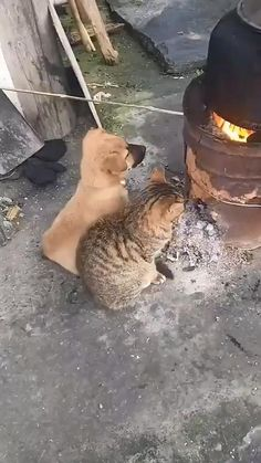 Cute Little Animals, Cute Funny Animals, Cute Cats, Funny Cats, Cute Animal Videos, Funny Animal Pictures, Happy Animals, Animals And Pets, Nature Animals