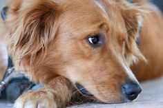 Crate Training, Dog Training Tips, Cute Photos, Dog Owners, Crates, Puppies, Golden Retrievers, Dogs, Retriever Puppy