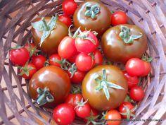 Tomates Kumato - Cherry - http://sensacionesgastronomicas.blogspot.com.es/2014/09/huerto-ecologico-2014-parades-en.html