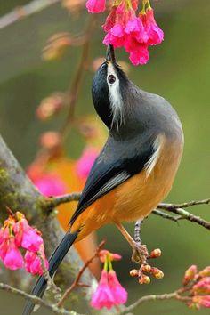 bonjour bonne journée de Jeudi gros bisous à toutes et à tous ♥♥♥