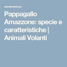 Pappagallo Amazzone: specie e caratteristiche | Animali Volanti