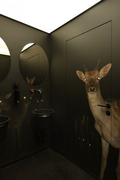 Deer in a headlight