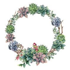 Find Watercolor Succulent Berries Wreath Hand Painted stock images in HD and millions of other royalty-free stock photos, illustrations and vectors in the Shutterstock collection. Watercolor Succulents, Watercolor Flowers, Wreath Watercolor, Watercolor Christmas, Berry Wreath, Decoupage Vintage, Flower Clipart, Floral Border, Floral Illustrations