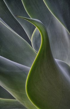 #patterns and #textures #succulents