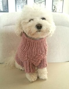Hand knit dog sweater / Pet Clothes / Dog Clothing / by BubaDog