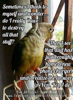 parrot. More
