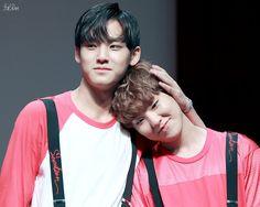 Mingyu & Hoshi