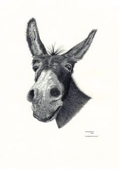 DONKEY head portrait Limited Edition art by ArcadiaPortraits