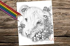 Coloring Book page Coloring Pages Instant download coloring
