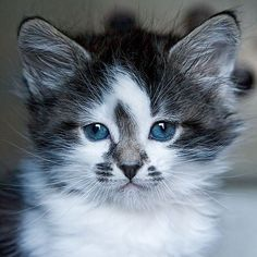 This guy wins the cutest kitten EVER award!