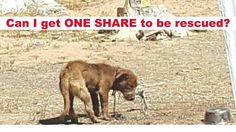 Dying dog is chained outside round the clock with little food and water! Rescue him now!