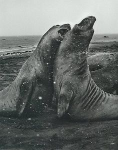 Photo by Sebastião Salgado