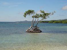 Cruise Cruise, Scenery, Cruises, Paisajes, Landscape, Landscapes, Lugares
