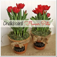 CONFESSIONS OF A PLATE ADDICT A Fun and Versatile Gift Idea...Chalkboard Flower Pots