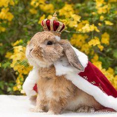 conejo-elegante-instagram-puipui (6)