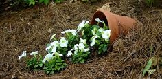 """A """"spill pot"""" brings a playful touch to your garden – and it's also a great way to recycle cracked or broken flower pots! All you need is a flower pot, some potting soil, and a few summer bedding plants."""