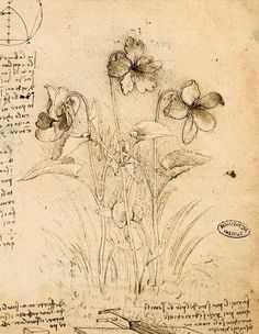 I don't like truth, ...EASTERN design office - Study of Violets, Leonardo Da Vinci (Italian,...