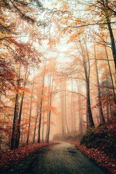 Beautiful foggy forest path!