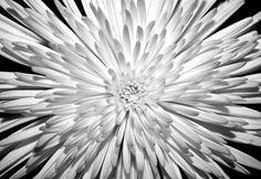 11 Refreshing Desktop Backgrounds to Celebrate Springtime Desktop Background Pictures, Black Background Images, Black Backgrounds, Desktop Backgrounds, Royal Enfield Wallpapers, Gadget World, Macbook Wallpaper, Spring Time, Mother Nature