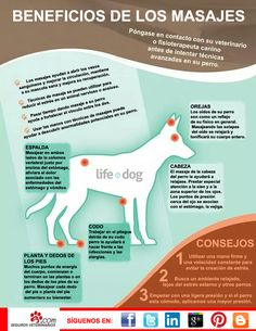 ¿Conocéis los beneficios de dar un masaje a nuestro #perro? Para más información consultar con vuestro veterinario o un especialista fisioterapeuta canino.