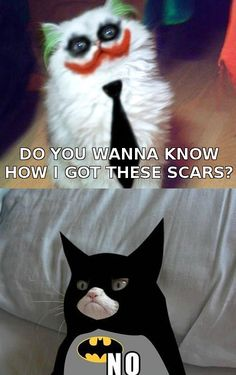 Grumpy Batcat.