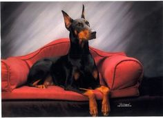 #Doberman #dog