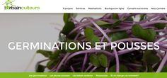 Conseils horticoles / Germinations et pousses : Voici ce que vous avez besoin de savoir pour cultiver vos propres verdures… à portée de main !