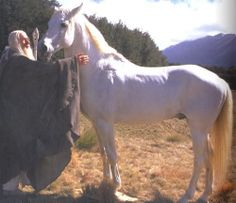 RIP Shadowfax, leader of the Mearas - may you run in the evergreen fields of Valinor for all eternity.
