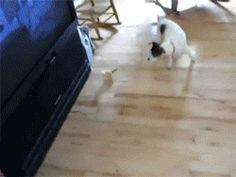 Check this funny animal here: http://funnypicsofanimals.com/post/132837126510 #funny #animal #lol #haha #gif #fail