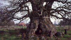 En sida med informationsblad om de svenska träden