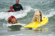 Surfing isn't just for humans:)