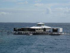 The Kamoka Tahitian Pearl Farm! Paradise...