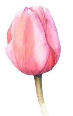 Tulips – Vízfesték és hasonlók – Home crafts Watercolor Cards, Watercolor Flowers, Watercolor Paintings, Tattoo Watercolor, Simple Watercolor, Watercolor Landscape, Watercolor Animals, Watercolor Background, Abstract Watercolor