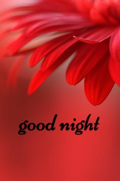 Good Morning Quotes Discover Good Night Images For Whatsapp Good Night Flowers, Lovely Good Night, Romantic Good Night, Good Night Messages, Good Night Sweet Dreams, Good Night Image, Good Night Quotes, Good Morning Good Night, Good Morning Images