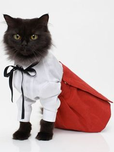 6 Cats That Dress Better Than You (Seriously)   | StyleCaster