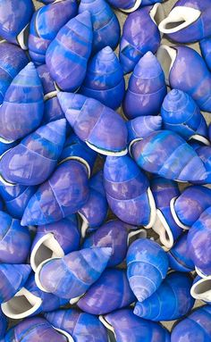 I've never seen blue shells before, have you?  these are stunning