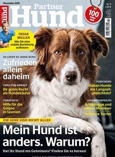 Zufrieden allein daheim. Gefunden in: Partner Hund - epaper, Nr. 11/2015